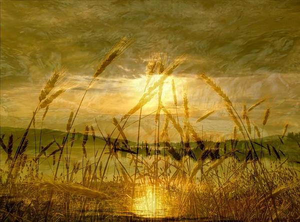 Photograph - Golden Sunset by Barbara St Jean