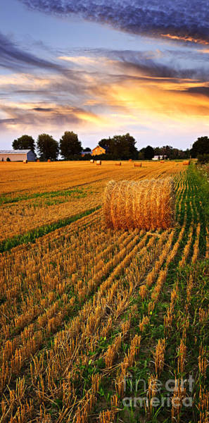 Hays Photograph - Golden Sunset Over Farm Field With Hay Bales by Elena Elisseeva