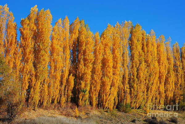Wall Art - Photograph - Golden Trees by Brandon Finister