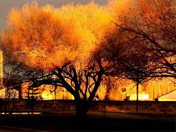 Photograph - Golden Trees by David Matthews