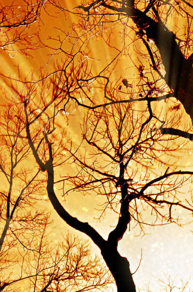 Photograph - Golden Trees by Marty Koch