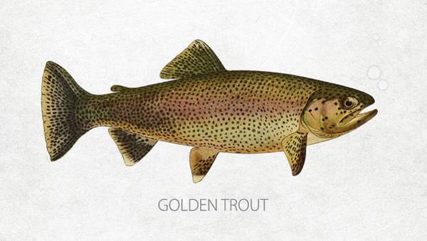 Wall Art - Digital Art - Golden Trout by Aged Pixel