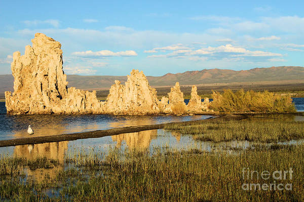 Photograph - Golden Tufas by Adam Jewell