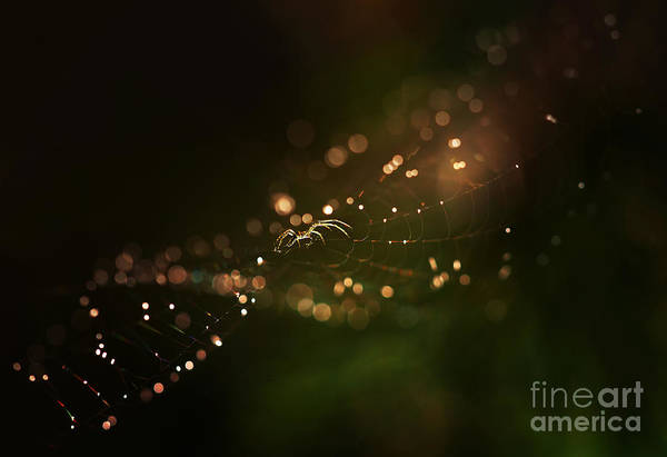 Wall Art - Photograph - Golden Web by Jaroslaw Blaminsky