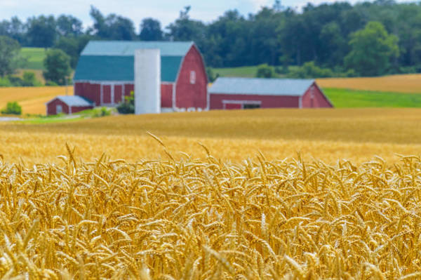 Photograph - Golden Wheat Fields by Garvin Hunter