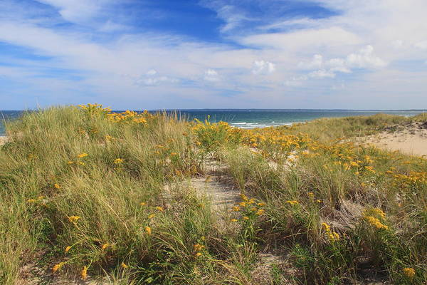 Wall Art - Photograph - Goldenrod Dunes by John Burk