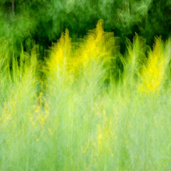 Photograph - Goldenrod Flurry by Rob Huntley