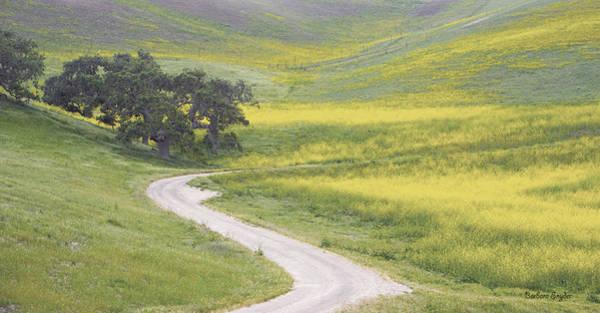 California Oak Digital Art - Goldenrod Oak Santa Ynez California by Barbara Snyder