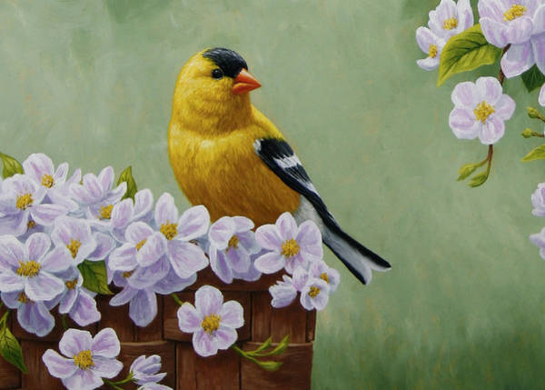 Goldfinch Wall Art - Painting - Goldfinch Blossoms Greeting Card 3 by Crista Forest