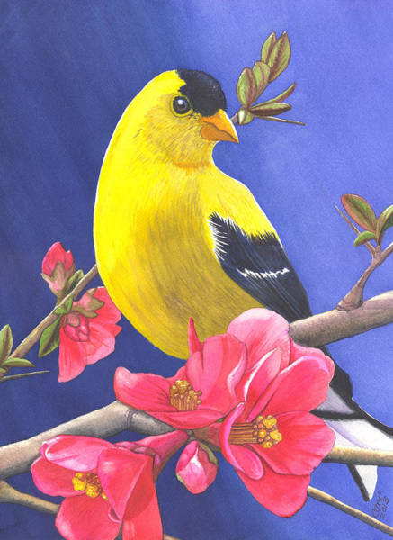 Painting - Goldfinch by Catherine G McElroy