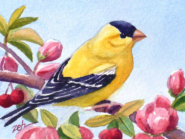 Painting - Goldfinch In A Crab Apple Tree by Janet Zeh