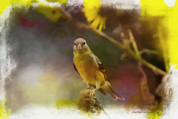 Digital Art - Goldfinch Php by Ericamaxine Price