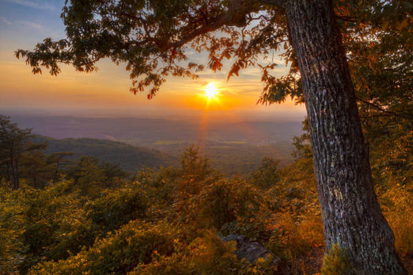 Chilhowee Photograph - Golds by Debra and Dave Vanderlaan