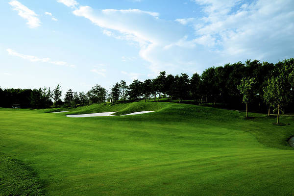 Sport Venue Photograph - Golf Course Background - Xlarge by Phototalk