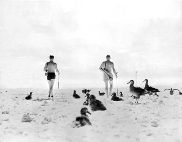 Photograph - Golf With Gooney Birds by Underwood Archives