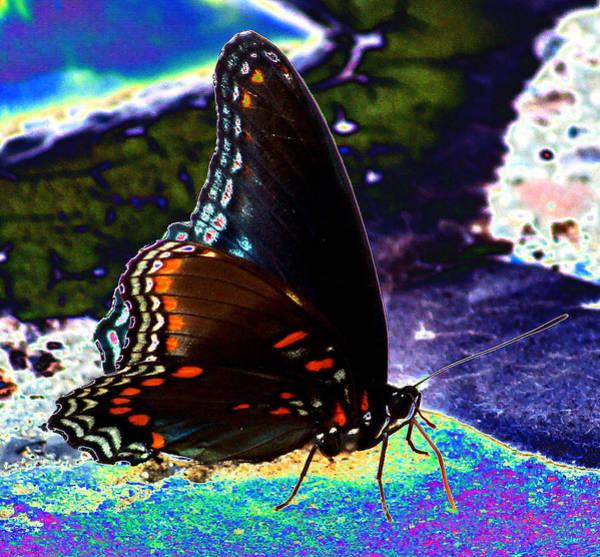 Digital Art - Gona-fly-butterfly by Kim Pate