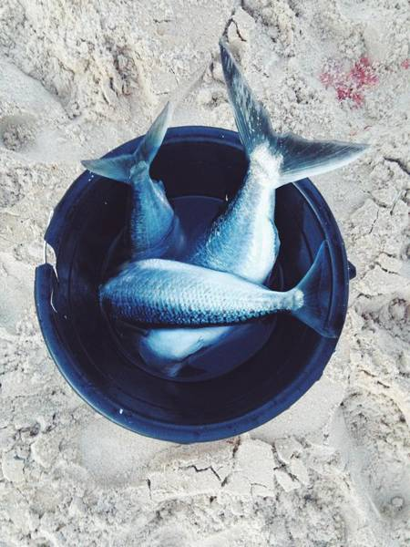 Bucket Photograph - Gone Fishing by Jodie Griggs