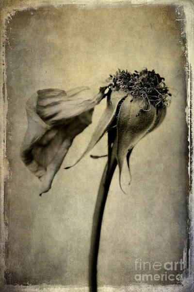 Photograph - Gone With The Wind by Elena Nosyreva