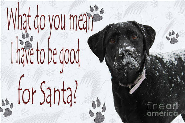 Black Lab Photograph - Good For Santa by Cathy Beharriell