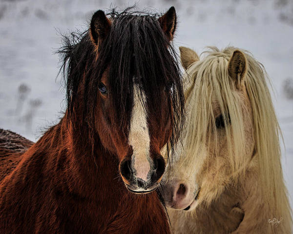 Ponies Photograph - Good Friends by Everet Regal