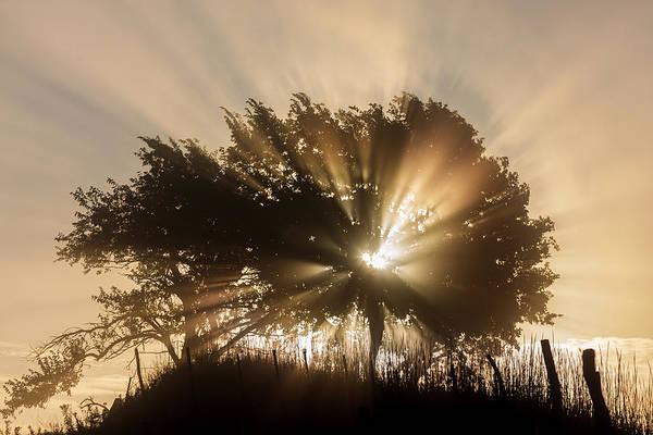 Photograph - Good Morning by Scott Bean