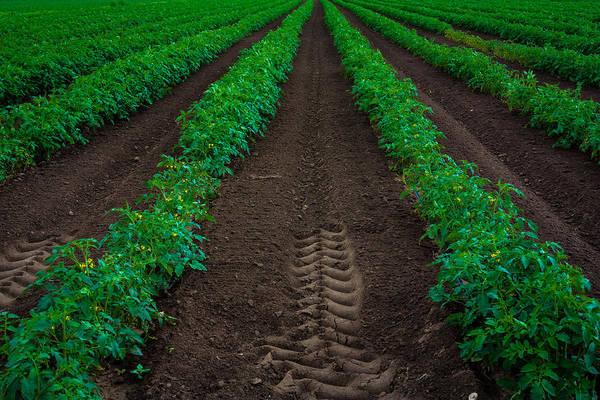 Photograph - Good Soil by Edgar Laureano