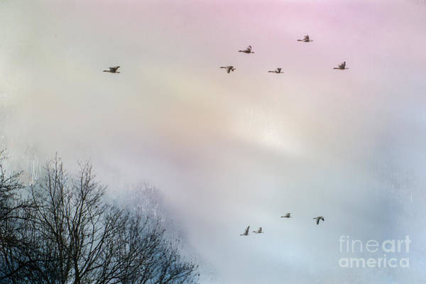 Photograph - Goose Flight by Hannes Cmarits