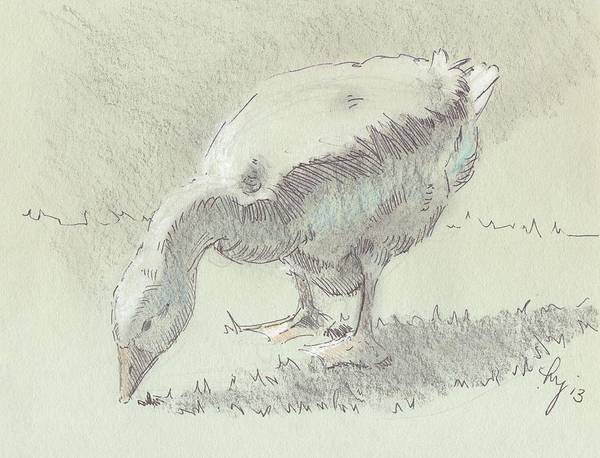 White Goose Drawing - Goose by Mike Jory
