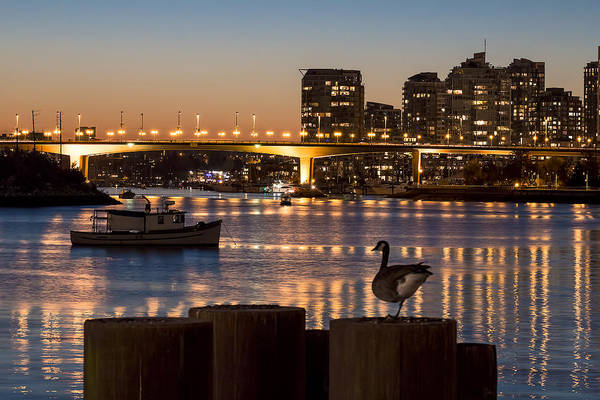 Metro Vancouver Wall Art - Photograph - Goose Necking by Michael Thornquist