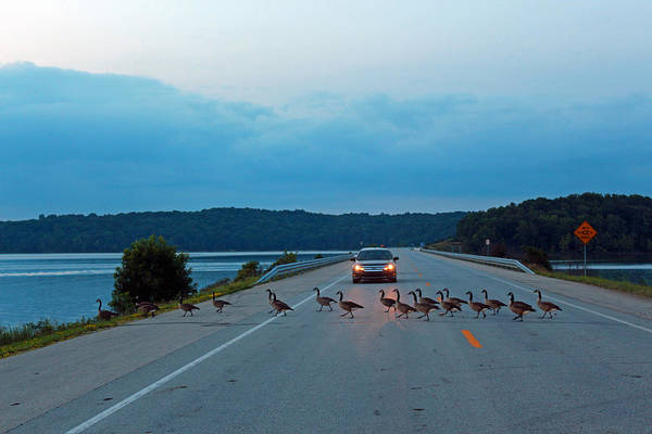 Photograph - Goose Rush Hour by Lorna R Mills DBA  Lorna Rogers Photography