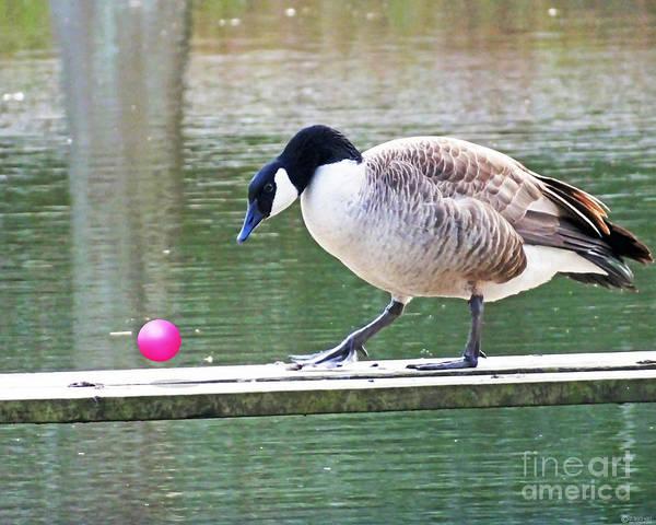Photograph - Goose Stepping  Rolling Roger by Lizi Beard-Ward