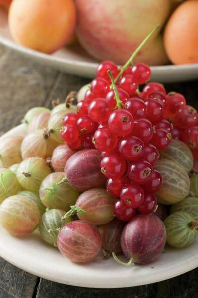 Wall Art - Photograph - Gooseberries And Redcurrants by Eising Studio - Food Photo and Video