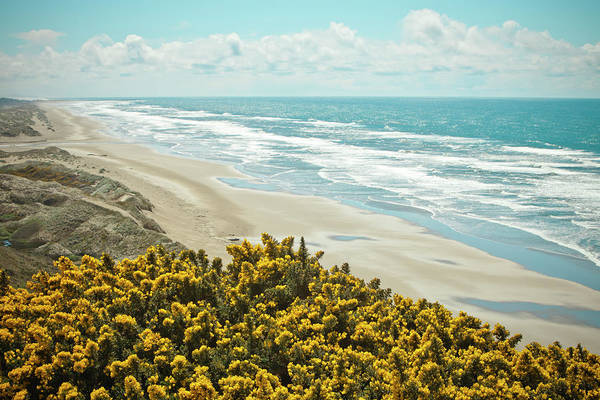 Oregon Dunes Photograph - Gores Flowers Bloom Beside Route 101 by Christopher Kimmel