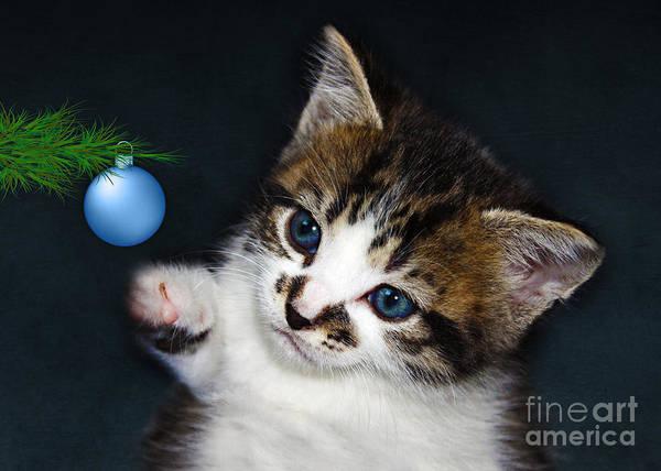 Eye Ball Photograph - Gorgeous Christmas Kitten by Terri Waters
