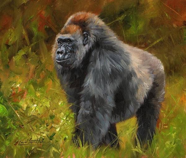 Gorilla Painting - Gorilla by David Stribbling