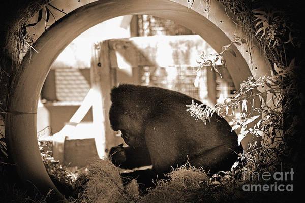 Photograph - Gorilla  by Karen Adams
