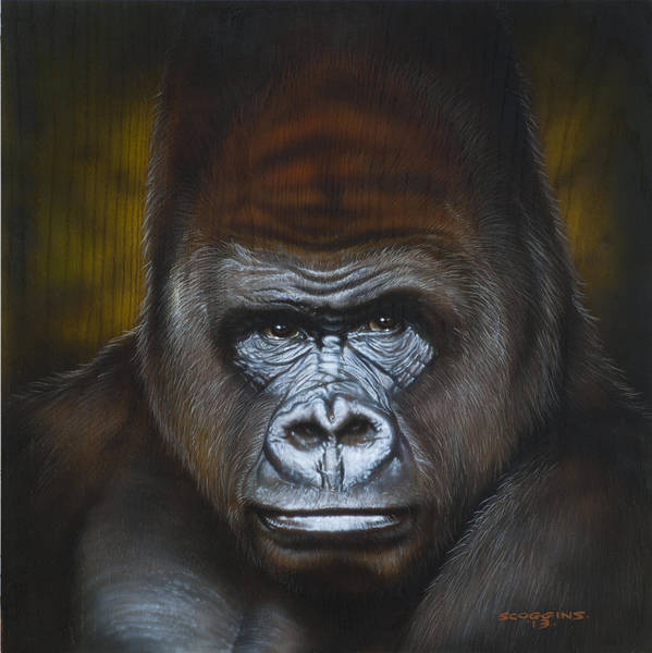 Wall Art - Painting - Gorilla by Timothy Scoggins