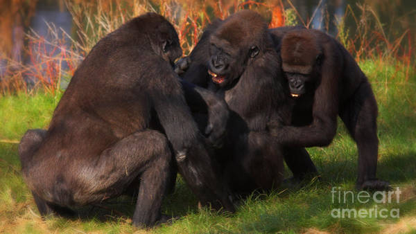 Photograph - Gorillas Having Fun Together  by Nick  Biemans