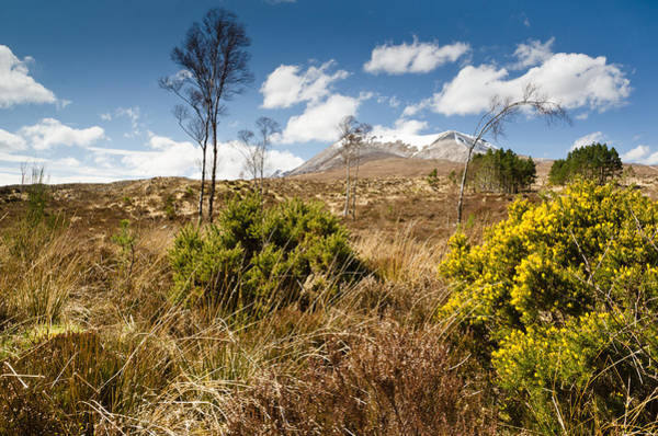 Beinn Eighe Photograph - Gorse Bush On Mountain Approach by David Head