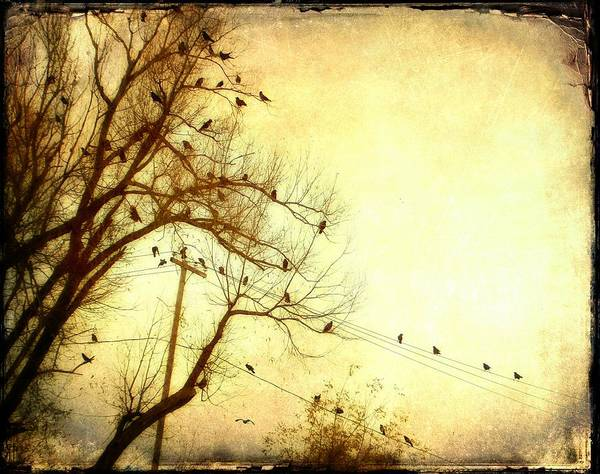 Fill Digital Art - Gossiping  Crows by Gothicrow Images