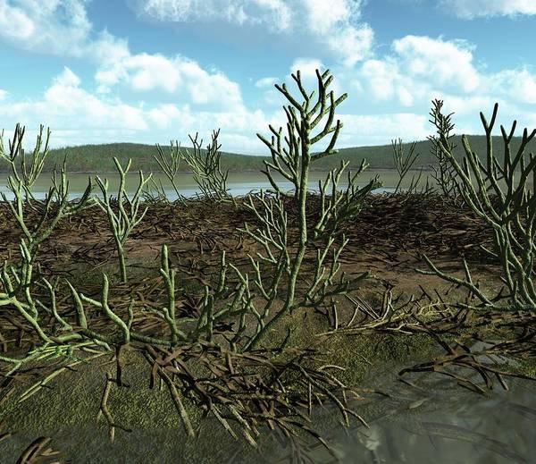 Prehistory Photograph - Gosslingia Prehistoric Plants by Walter Myers