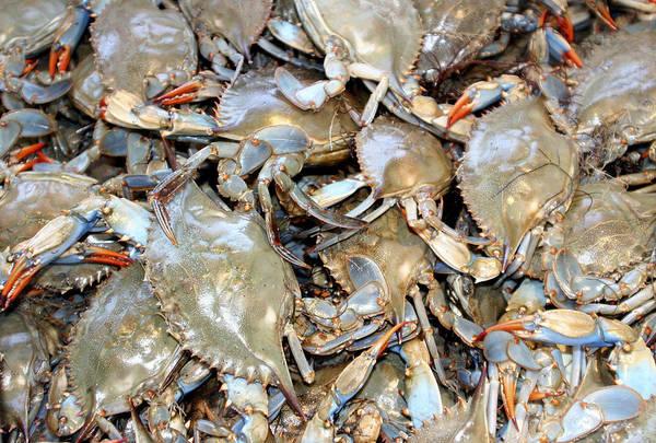 Camera Raw Photograph - Blue Claw Crabs by Bob Slitzan