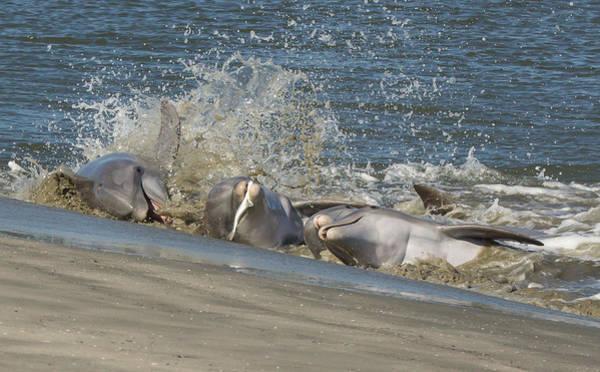Kiawah Island Photograph - Gotcha by Patricia Schaefer