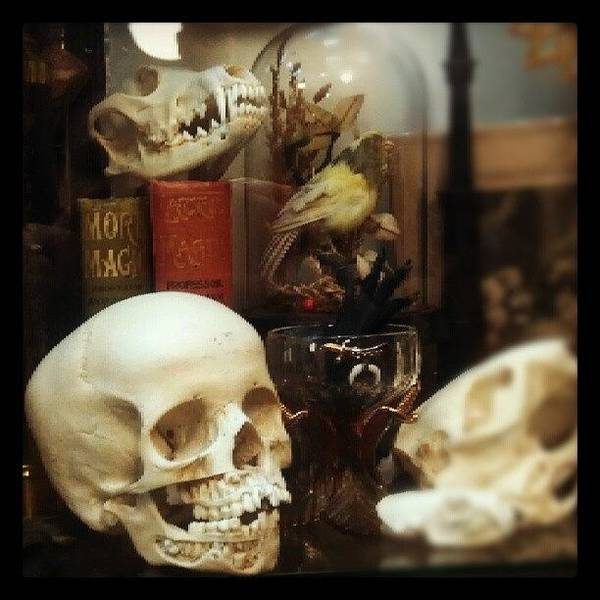 Steampunk Wall Art - Photograph - Gothic Curio by Rachel Waters