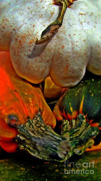 Photograph - Gourds by Alexa Szlavics