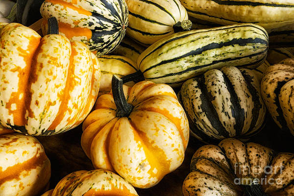 Photograph - Gourds by Mark Miller