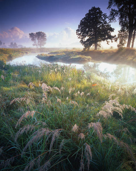 Photograph - Grab Some Grass by Ray Mathis