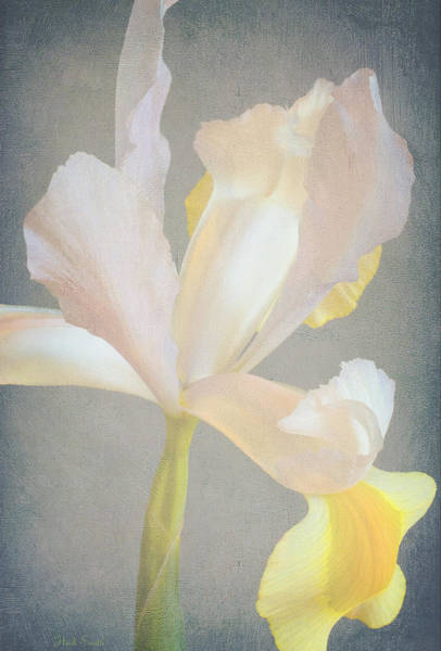 Wall Art - Photograph - Grace And Elegance by Heidi Smith