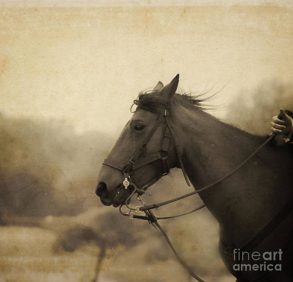 Photograph - Graceful Beauty by Kim Henderson