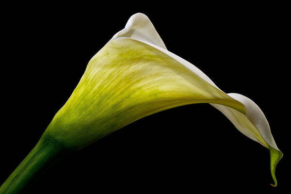 Photograph - Graceful Curves by Kim Andelkovic